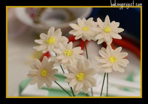 daisyfinal.jpg